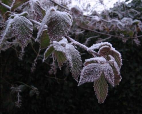 Winter Braam met rijp